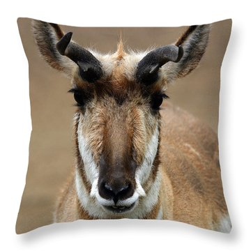 Pronghorn Throw Pillow by Karol Livote