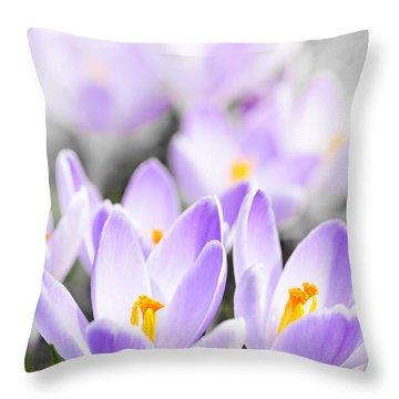 Purple Crocus Blossoms Throw Pillow by Elena Elisseeva