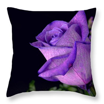 Purple Rose Throw Pillow by Darren Fisher