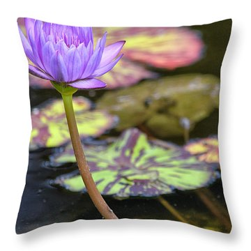 Purple Water Lilly Throw Pillow by Lauri Novak