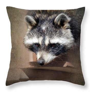 Raccoon 3 Throw Pillow by Betty LaRue