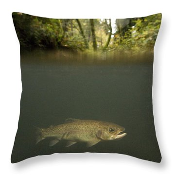 Rainbow Trout In Creek In Mixed Coast Throw Pillow by Sebastian Kennerknecht