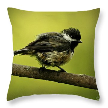 Rainy Days - Chickadee Throw Pillow by Inspired Nature Photography Fine Art Photography