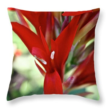 Red Canna Throw Pillow by Susan Herber