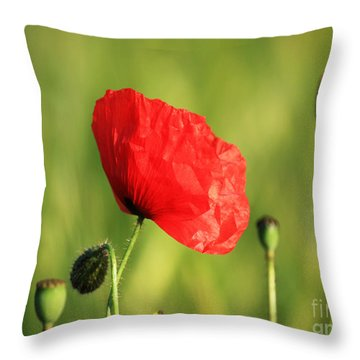Red Poppy In Field Throw Pillow by Pixel Chimp