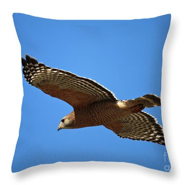 Red Shouldered Hawk In Flight Throw Pillow by Carol Groenen