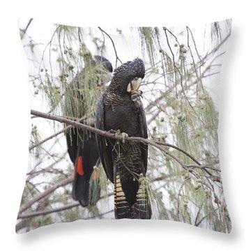 Red Tailed Black Cockatoos Throw Pillow by Douglas Barnard