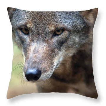 Red Wolf Closeup Throw Pillow by Karol Livote