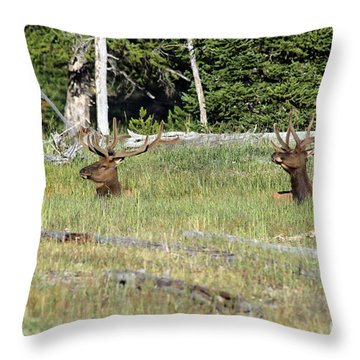 Relaxed Elk Throw Pillow by Shawn Naranjo