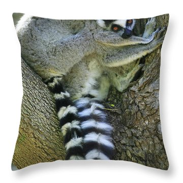 Ring-tailed Lemurs Madagascar Throw Pillow by Cyril Ruoso