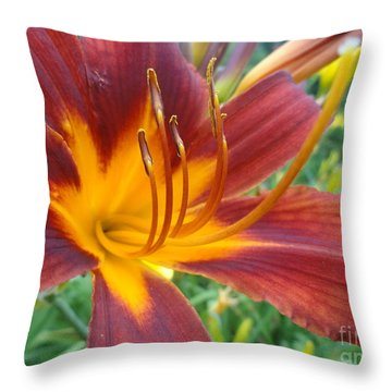 Ripe Blood Orange Throw Pillow by Trish Hale