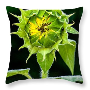 Rising Sun Throw Pillow by Christopher Holmes