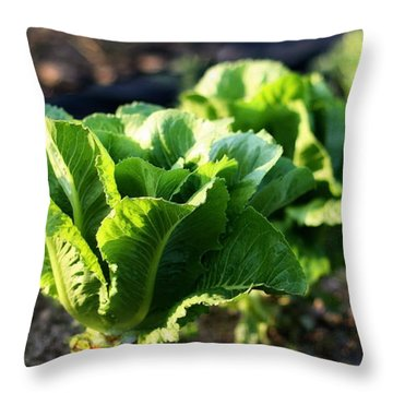 Row Of Romaine Throw Pillow by Angela Rath