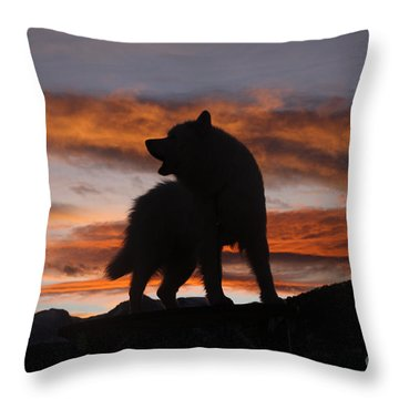Samoyed At Sunset Throw Pillow by Kent Dannen and Photo Researchers