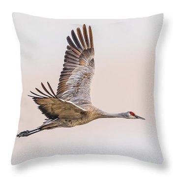 Sandhill Crane N3 Throw Pillow by Fred J Lord