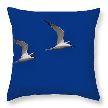 Sandwich Terns Throw Pillow by Tony Beck