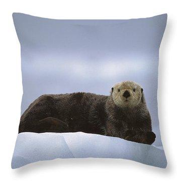Sea Otter Enhydra Lutris Male Hauled Throw Pillow by Suzi Eszterhas