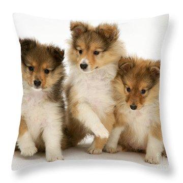 Sheltie Puppies Throw Pillow by Jane Burton