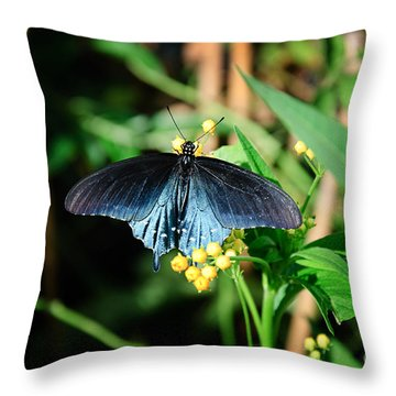 Shimmering Beauty Throw Pillow by Andee Design