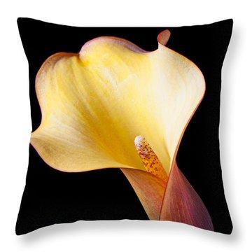 Single Calla Liliy Throw Pillow by Garry Gay