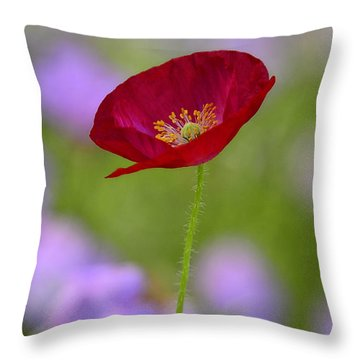 Single Red Poppy  Throw Pillow by Saija  Lehtonen