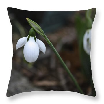 Single Snowdrop Squared 1 Throw Pillow by Teresa Mucha