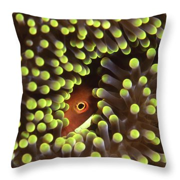 Skunk Clownfish Hiding In Anemone Throw Pillow by Beverly Factor