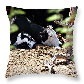 Sleepy Arizona Cows Throw Pillow by Methune Hively