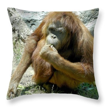 Snack Time Throw Pillow by Lisa Phillips