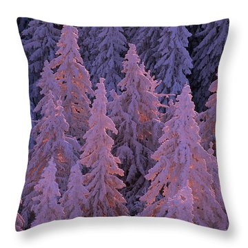 Snow Blanketed Fir Trees In Germanys Throw Pillow by Norbert Rosing