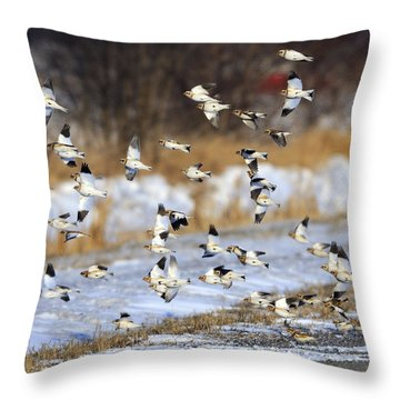 Snow Buntings Throw Pillow by Tony Beck