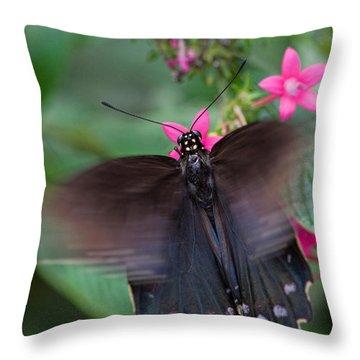 Spicebush Swallowtail Throw Pillow by Joann Vitali