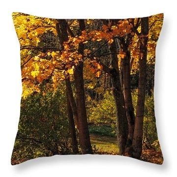 Splendor Of Autumn. Maples In Golden Dresses Throw Pillow by Jenny Rainbow