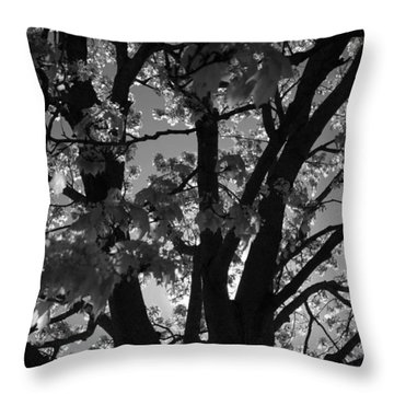 Spring Forth Throw Pillow by Lyle Hatch