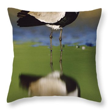 Spur Winged Plover With Its Reflection Throw Pillow by Tim Fitzharris