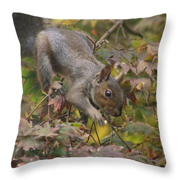 Squirrel In Fall Throw Pillow by Valia Bradshaw