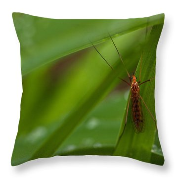 Squito Has Landed Throw Pillow by Karol Livote
