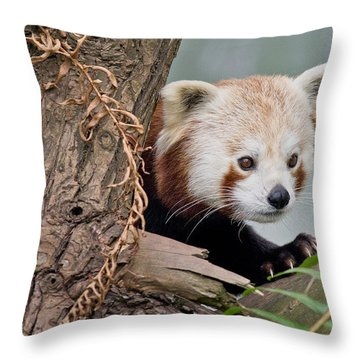 Stealthy Red Panda Throw Pillow by Greg Nyquist