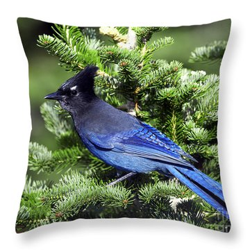 Stellers Jay Throw Pillow by Sharon Talson