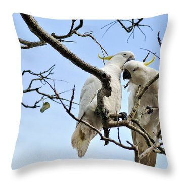Sulphur Crested Cockatoos Throw Pillow by Kaye Menner