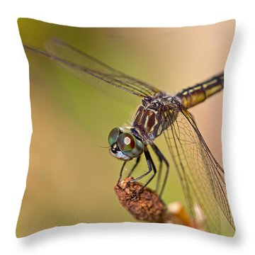 Summer Visitor Throw Pillow by Karol Livote