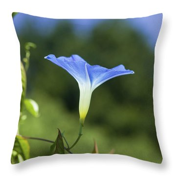 Sun On Morning Glory Throw Pillow by Rich Franco