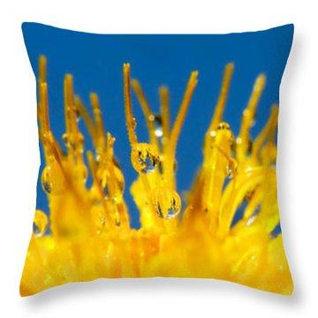 Sunrise Throw Pillow by Lisa Knechtel