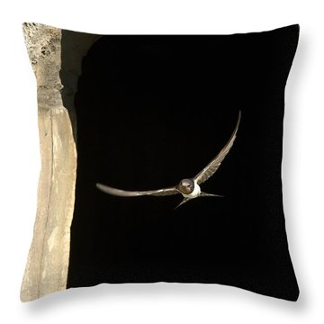 Swallow In Flight Throw Pillow by John Short