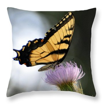 Swallowtail Throw Pillow by Marty Koch