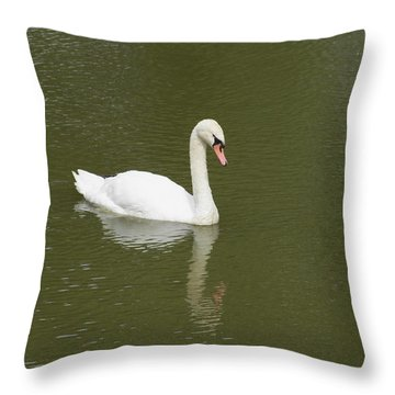 Swan Looking At Reflection Throw Pillow by Corinne Elizabeth Cowherd