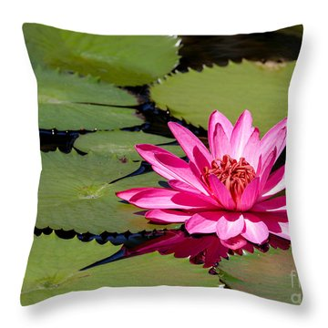 Sweet Pink Water Lily In The River Throw Pillow by Sabrina L Ryan
