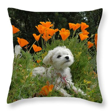Sweet Sunshine Throw Pillow by Lynn Bauer