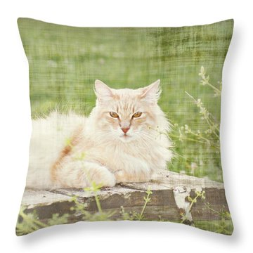 Tabitha  Throw Pillow by Susan Bordelon