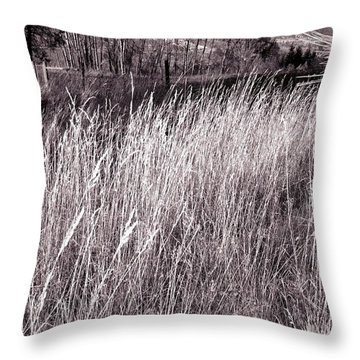 Tall Grasses Throw Pillow by Will Borden